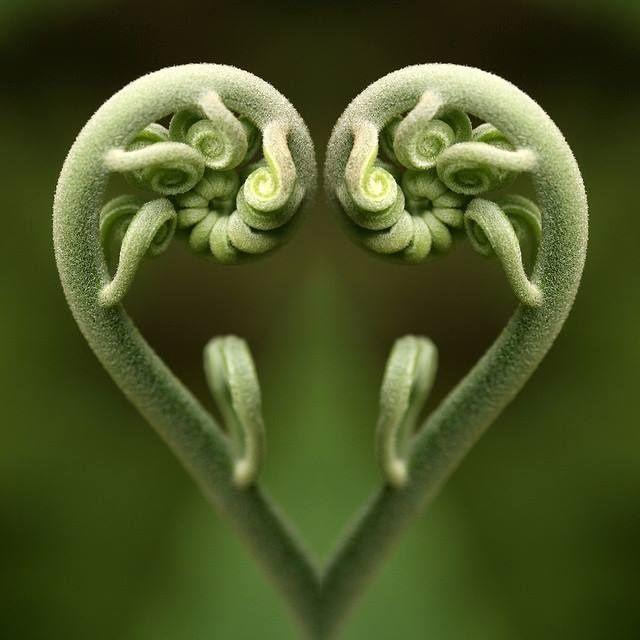 Was haben Sonnenblume, Tannenzapfen, Ananas, Walzen-Wolfsmilch gemeinsam? Auf den ersten Blick nicht viel. Doch all diesen Pflanzen liegt ein Bauplan zugrunde, der sich mit den sogenannten Fibonacci-Zahlen beschreiben lässt. Leonardo Pisano Fibonacci war ein berühmter Mathematiker; er entdeckte die nach ihm benannte Zahlenfolge. In der Natur kommen erstaunlich viele Konstruktionen mit der Fibonacci-Folge vor. Künstler … Weiter lesen »