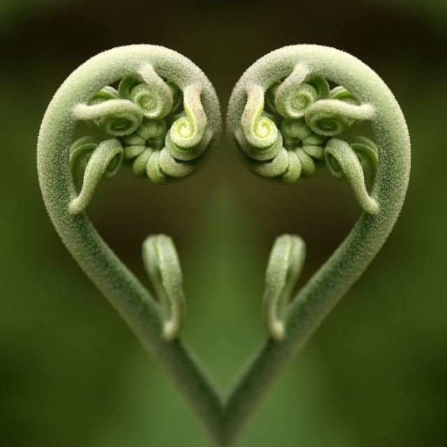La-magie-de-Fibonacci (4)                                                                                                                                                      Plus