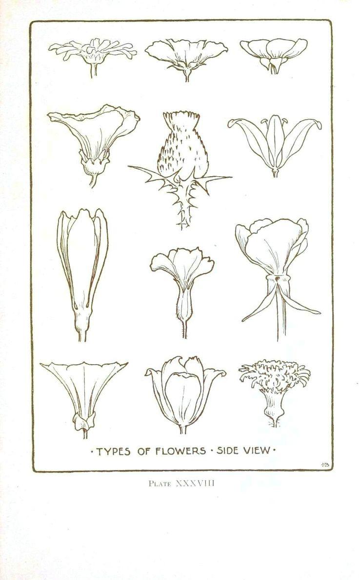 Vintage Printable at Swivelchair Media - Beta | Botanical – Flower – Flower line drawings