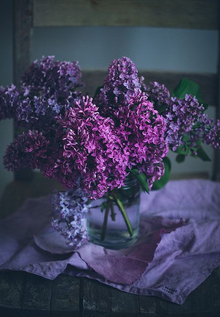 Lilacs by Call me cupcake on Flickr