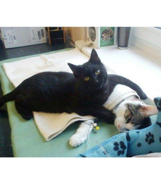 Nurse Cat Looks After Other Animals in Shelter | Nurse Cat. CAT MASSAGE  Radamenes also is an expert massage-giver.