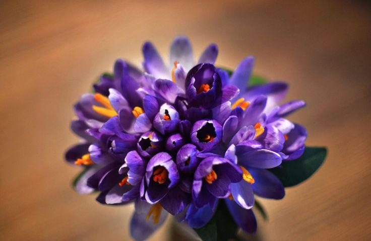 Spring is in the air by Olha Kuzmyn on 500px