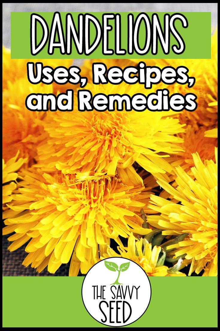 Dandelions Uses Recipes And Remedies The Savvy Seed Recipe In 2020 Dandelion Edible Food Natural Lifestyle