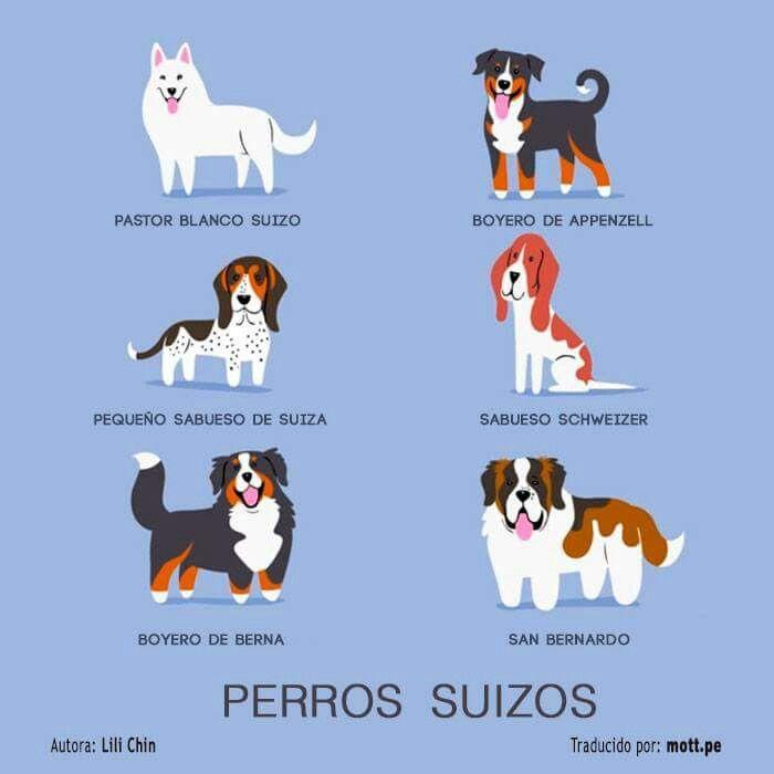 Perros suizos