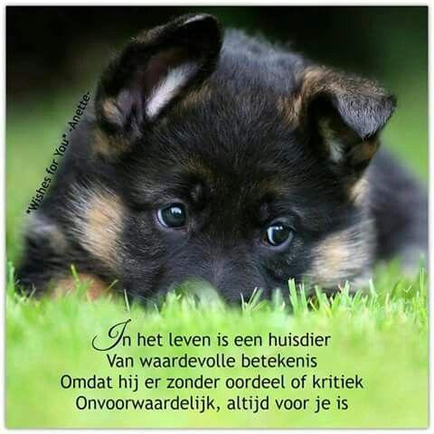 In het leven is een huisdier ...