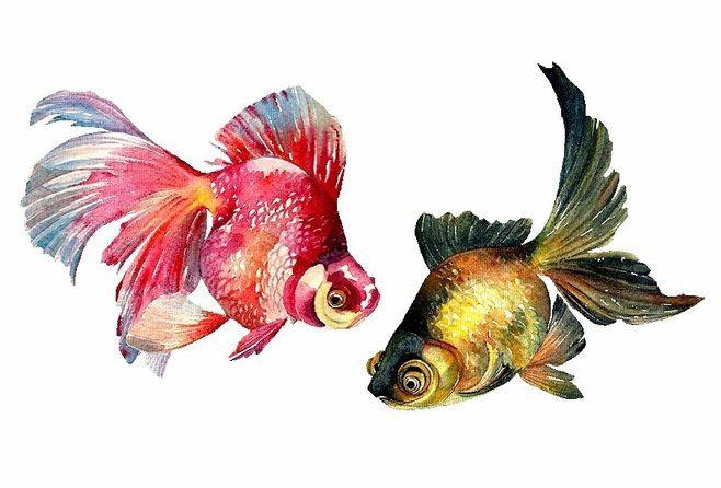 Arte de Goldfish peces de colores acuarela pintura por ARTTARATET