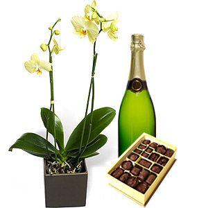 Raffinata orchidea con spumante e cioccolatini