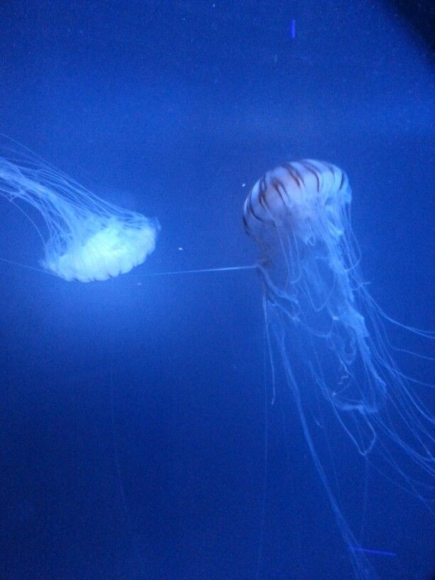 Jelly fish at the sea life centre