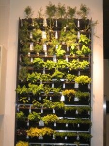 Indoor Wall Herb Gardenthermadors Ultimate Kitchen Experience Bergamo  Interiors Llc Wgeosj