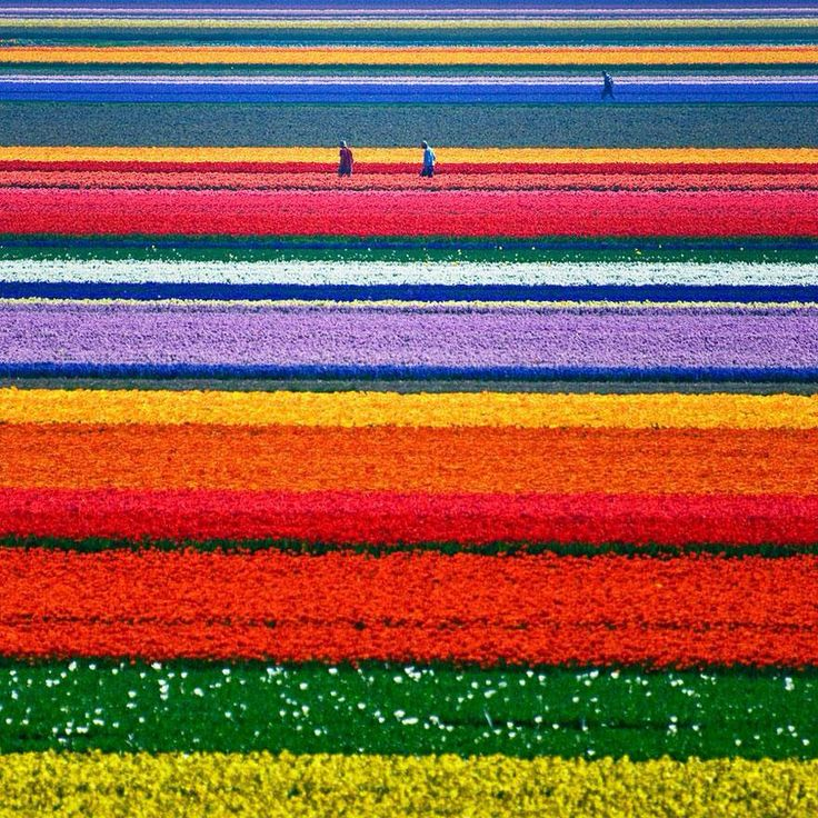 Gorgeous Rows of Flowers