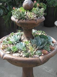 "succulent ""fountain"""