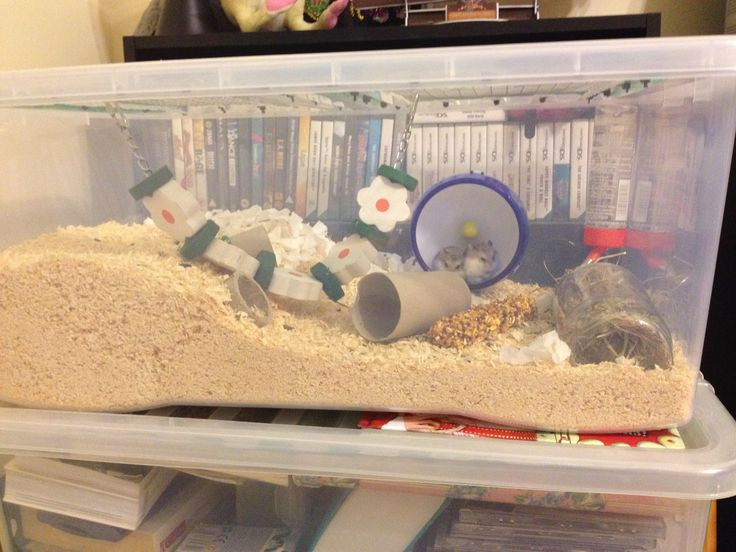 Setting Up Your Hamsters Cage. Preparing to bring your new hamster home is exciting, find out here what are the essential items that your hamster needs.