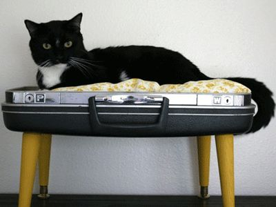 Recycling ideas, old suitcases for cats beds with soft pillows, made of eco friendly and natural materials--DIY cat bed