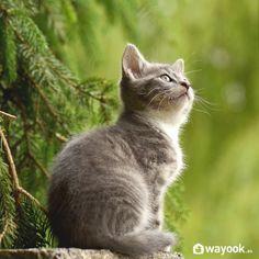 metodos naturales para ahuyentar gatos jardin