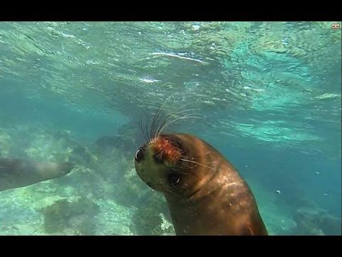 10 Awesome Facts About Galapagos Sea Lions | Latin Roots Travel (Ecuador)