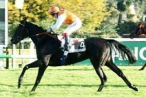 longchamp plat 1600 mètres 16 chevaux les cotes de ce quinté http://les-amis-du.pmu-pronostics.com
