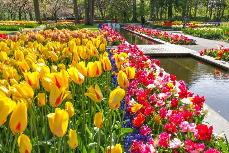 Wiosna, Tulipany, Park, Keukenhof, Lisse, Holandia