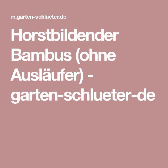 Horstbildender Bambus (ohne Ausläufer) - garten-schlueter-de