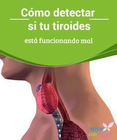 Cómo detectar si tu #tiroides está funcionando mal  Las complicaciones de la #glándula tiroides pueden pasar desapercibidas, ya que se confunden con otras #dolencias comunes que suelen afectar a nuestra salud general. Ante cualquier sospecha, deberemos acudir al especialista #Curiosidades