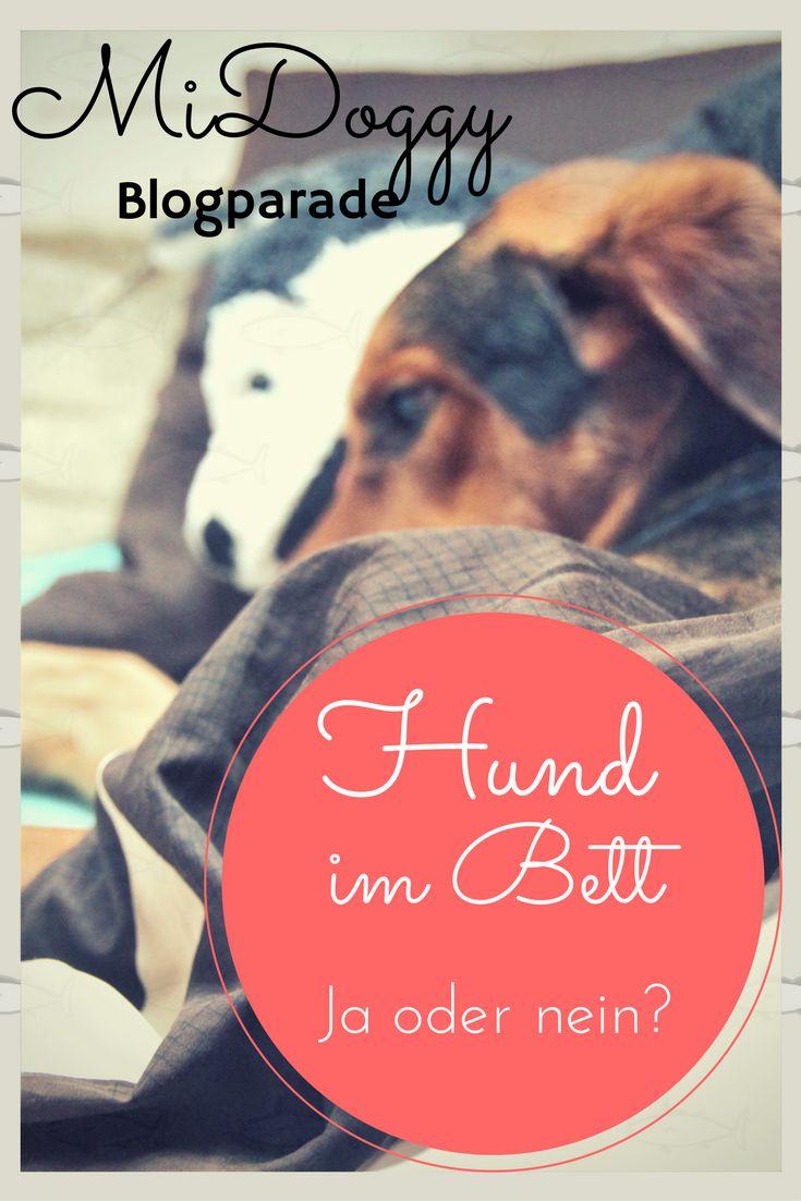 the 25+ best ideas about hunde bett on pinterest | welpen betten, Schlafzimmer