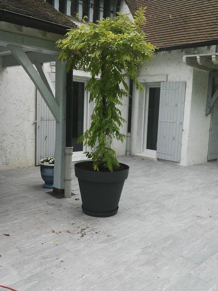 glycine de 3 m de haut plant dans un pot eda plastique de couleur gris anthracite et de 80 cm. Black Bedroom Furniture Sets. Home Design Ideas