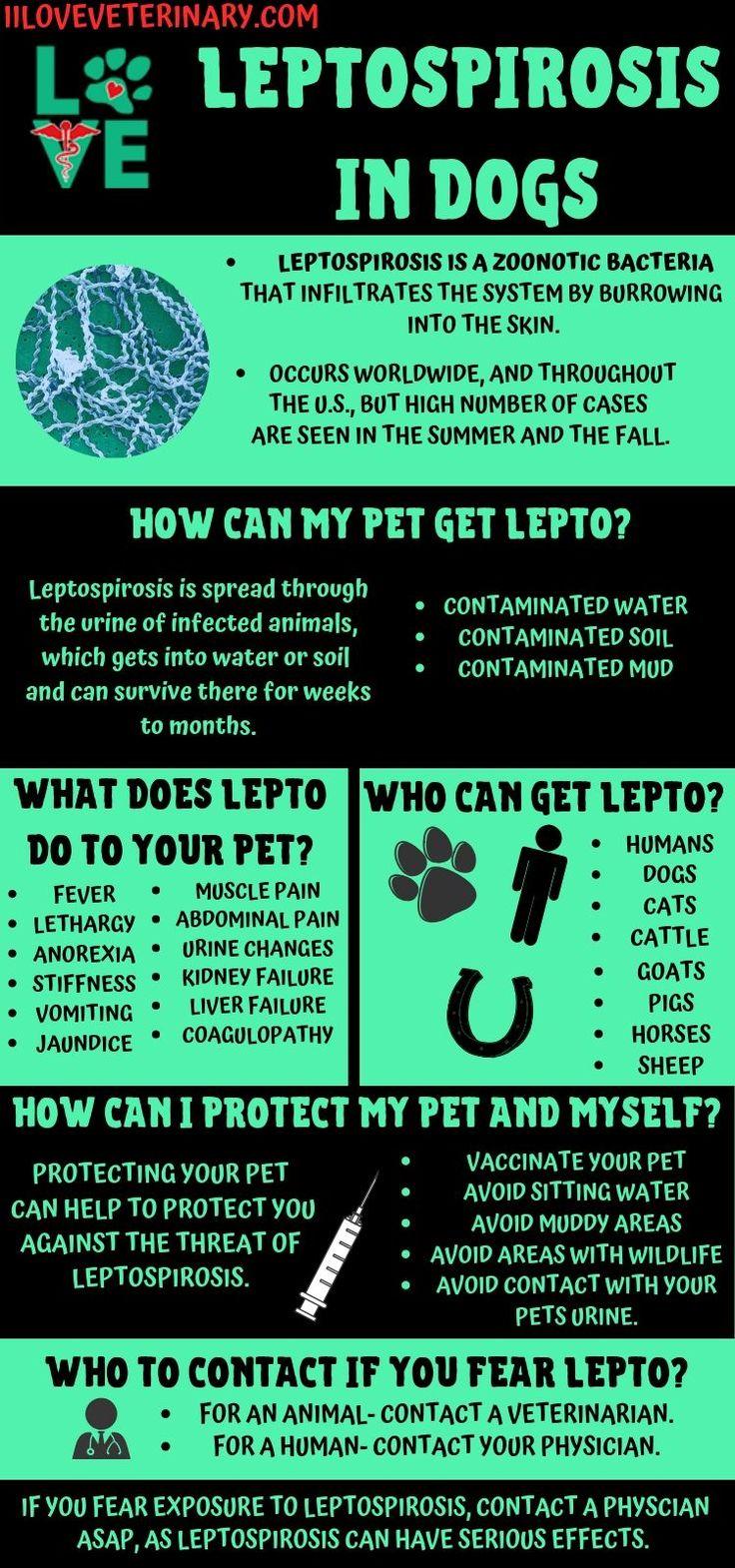 Leptospirosis in Dogs I Love Veterinary in 2020 Vet