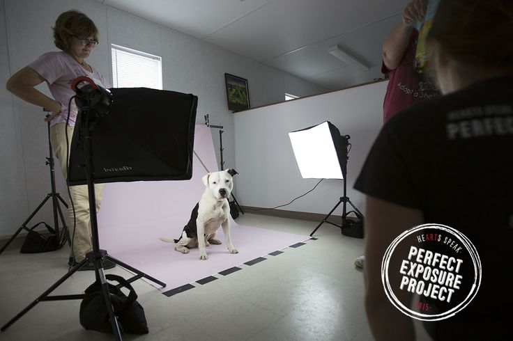 This year, we visited 4 open admission shelters with our Perfect Exposure Project, donating pro camera equipment and creative marketing workshops to help staff and volunteers save more animals.