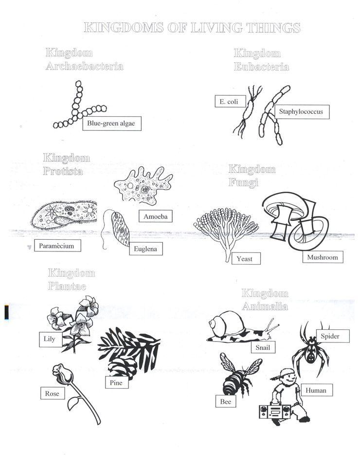 31 Biological Classification Worksheet Five Kingdom System