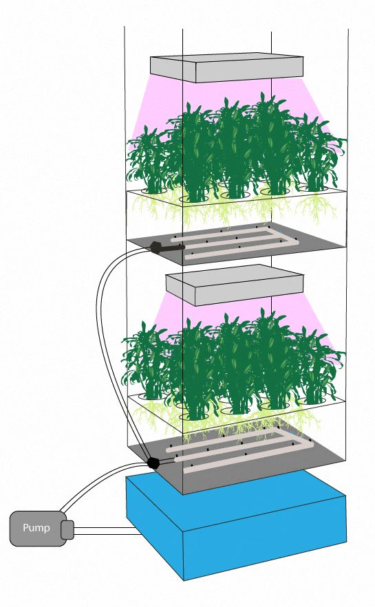 Remarkable automated mini aquaponic Full Report (With ...