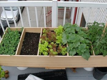 Bookshelf Balcony: Put that old bookshelf to use on your balcony, by looks of things you'll be able to harvest quite a bit out of this little garden!