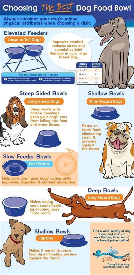 Choosing A Dog Food Bowl