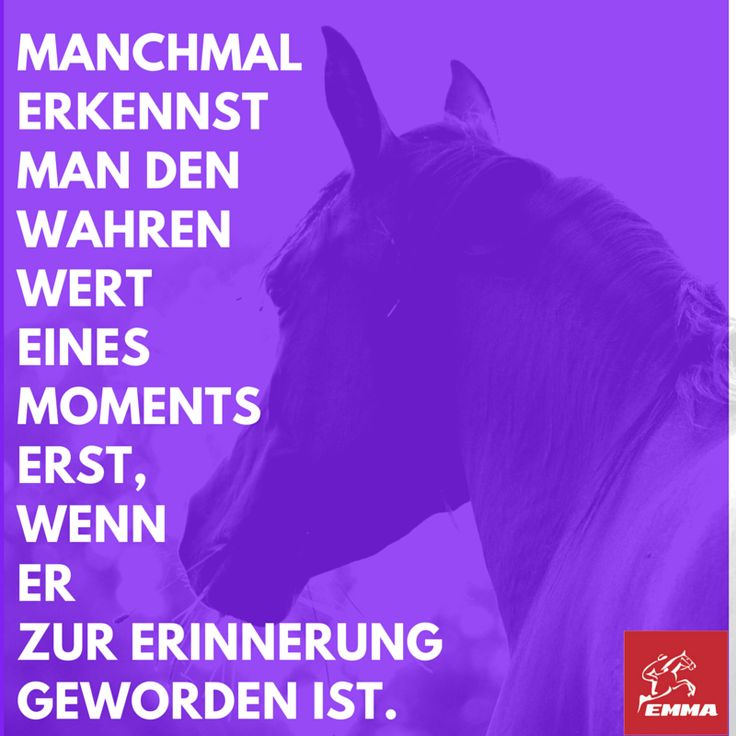 Pferdesprüche & Pferde zubehör-emma-pferdefuttershop.de(6) 2