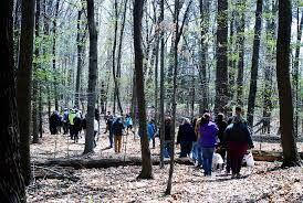 Tree Phenology Walk Series -  -  http://bit.ly/2skNRYM