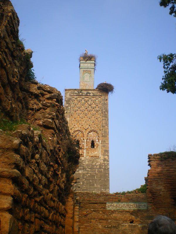 Chellah Rabat (Maroc)