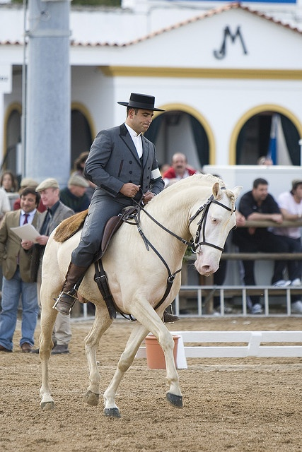 "Lusitano at Golegã horse festival, Portugal The ""Lusitano"" is the typical portuguese horse."