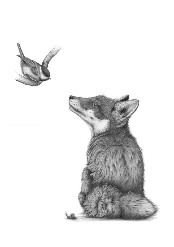 Fox and bird drawing