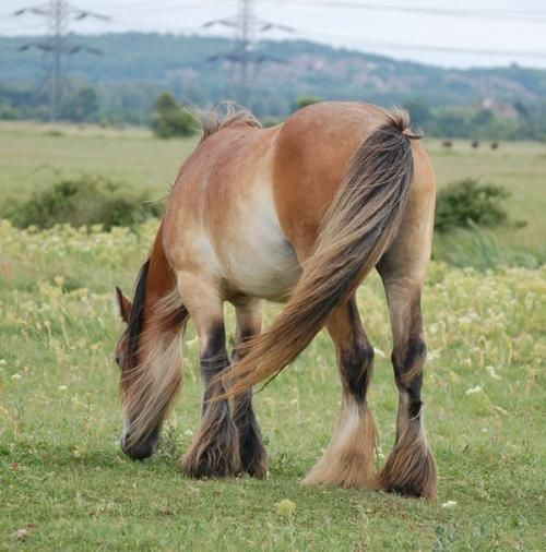 17 best images about Equine Color: Pangare / Mealy on ...