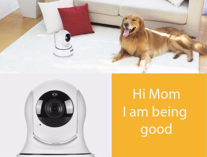 Go To SheebaPets.com >> For Pet Monitors