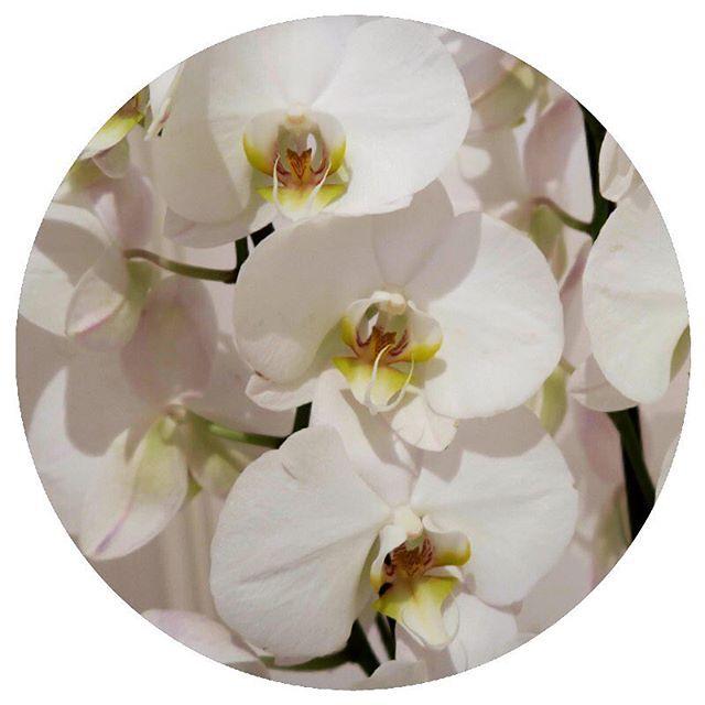 #Orchids #whiteorchid #freshflowers #flowersofinstagram #instaflower #grow…