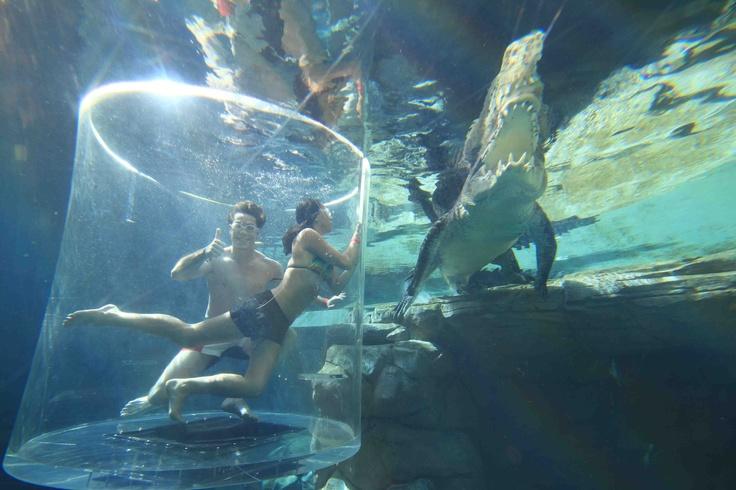 raft how to kill the shark underwater