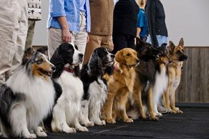 dog boot camps info #dogs