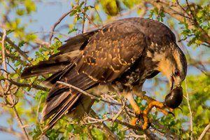 Crooked Tree Wildlife Sanctuary Tour » A Plus Belize Adventures Tours