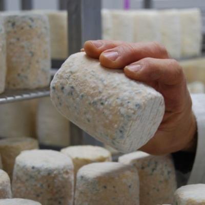Une AOP pour le fromage Charolais