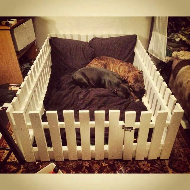 Diy Cute Dog Beds Www Pixshark Com Images Galleries