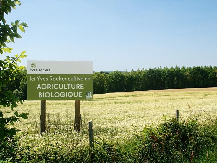 Las 55 hectáreas de campos de agricultura biológica en La Gacilly estan etiquetadas según la certificación Ecocert basada en estrictas especificaciones