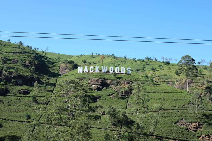 Mackwoods. This is Hollywood in tea world. During season woman are on plantation collecting tea leaves. Hard work indeed, challenging your patience.