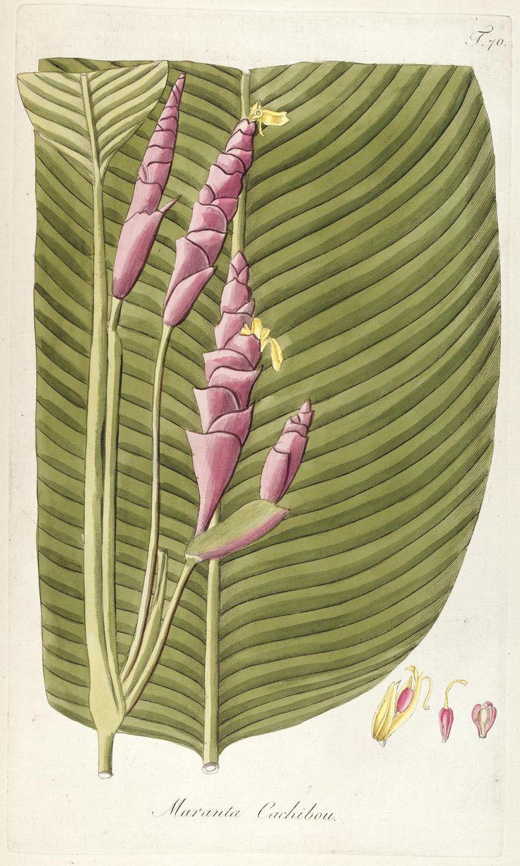 Fragmenta botanica, figuris coloratis illustrata - Biodiversity Heritage Library