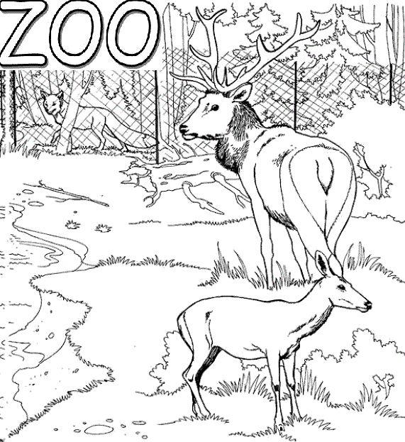 60 mejores imágenes de Zoo en Pinterest | Colorante, Zoológicos y Color