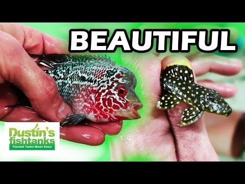 122) AQUARIUM FISH FARM- SEGREST TROPICAL FISH TOUR WITH