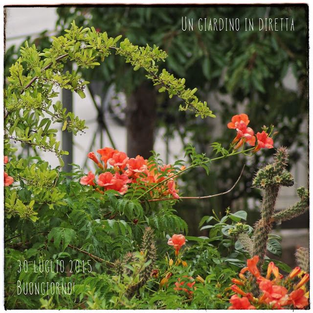 Oltre 25 fantastiche idee su fiori di luglio su pinterest for Il fico d india rural chic